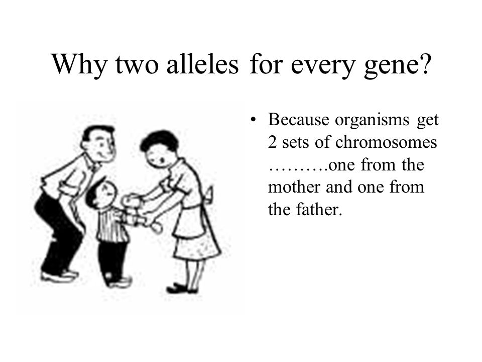 Why two alleles for every gene