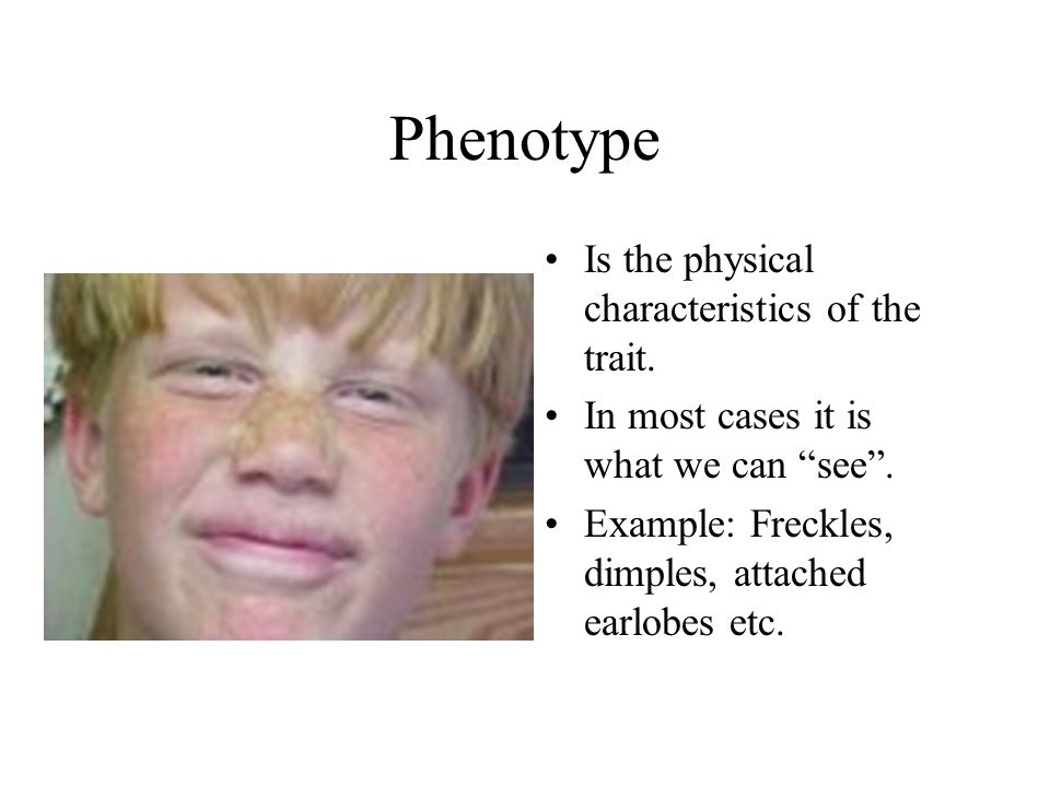 Phenotype Is the physical characteristics of the trait.