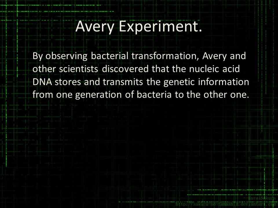 Avery Experiment.