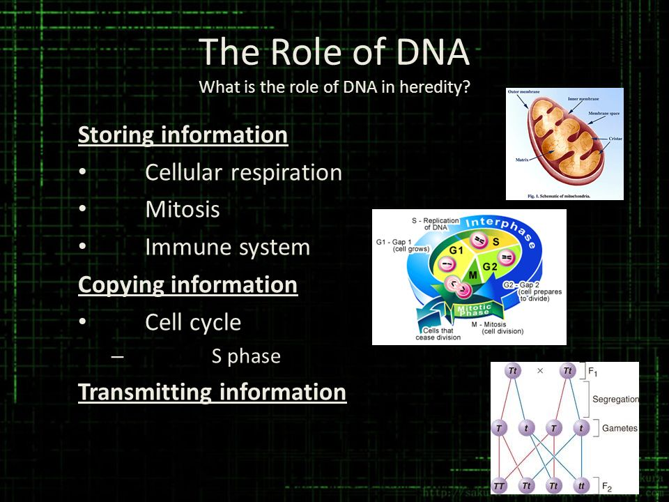 The Role of DNA What is the role of DNA in heredity