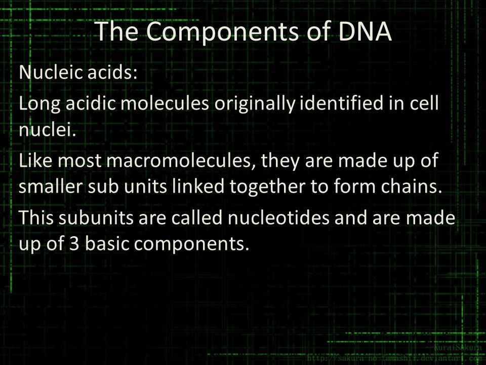 The Components of DNA