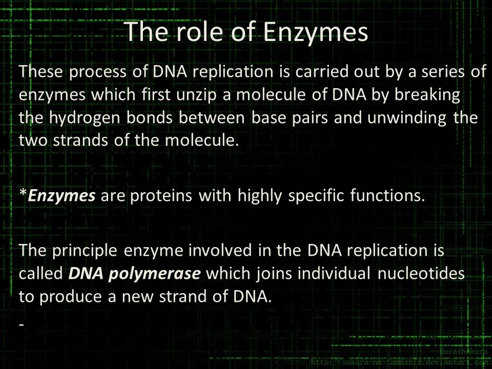 The role of Enzymes