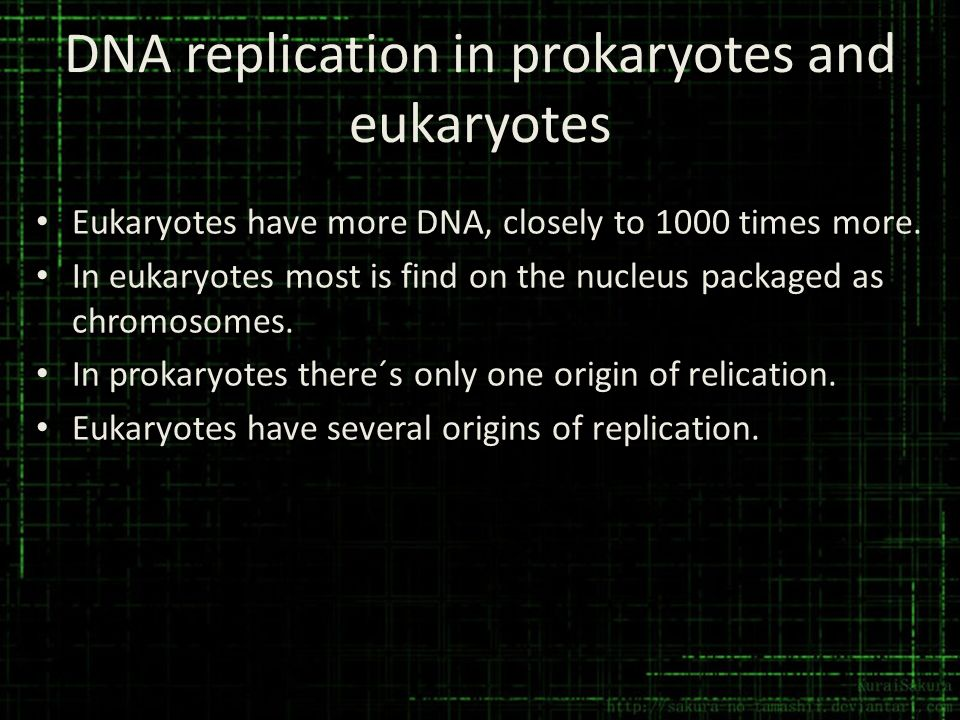 DNA replication in prokaryotes and eukaryotes