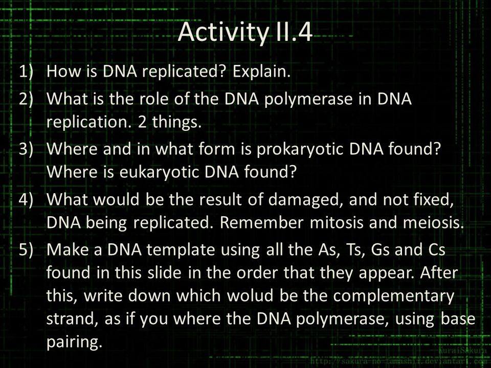 Activity II.4 How is DNA replicated Explain.