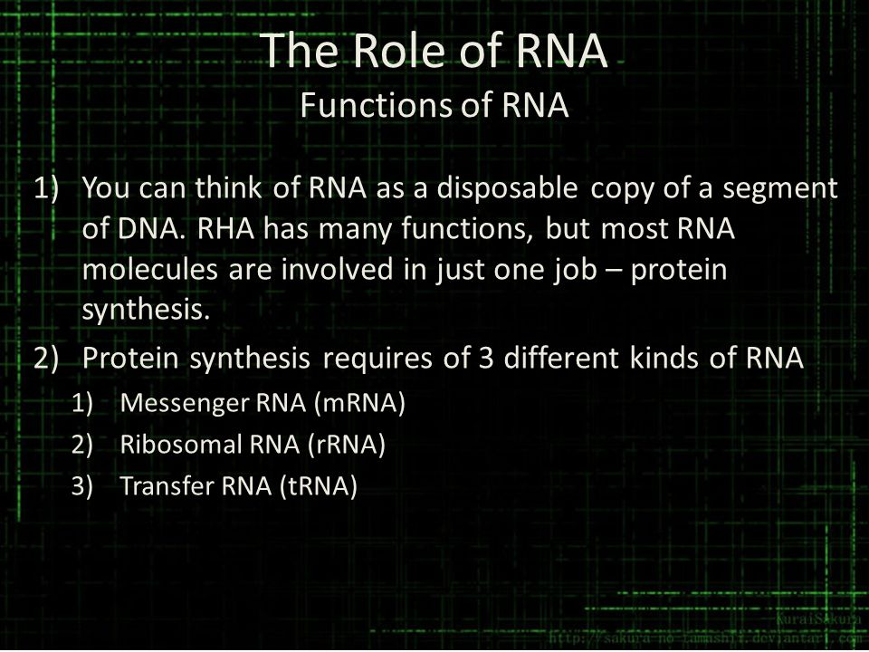 The Role of RNA Functions of RNA