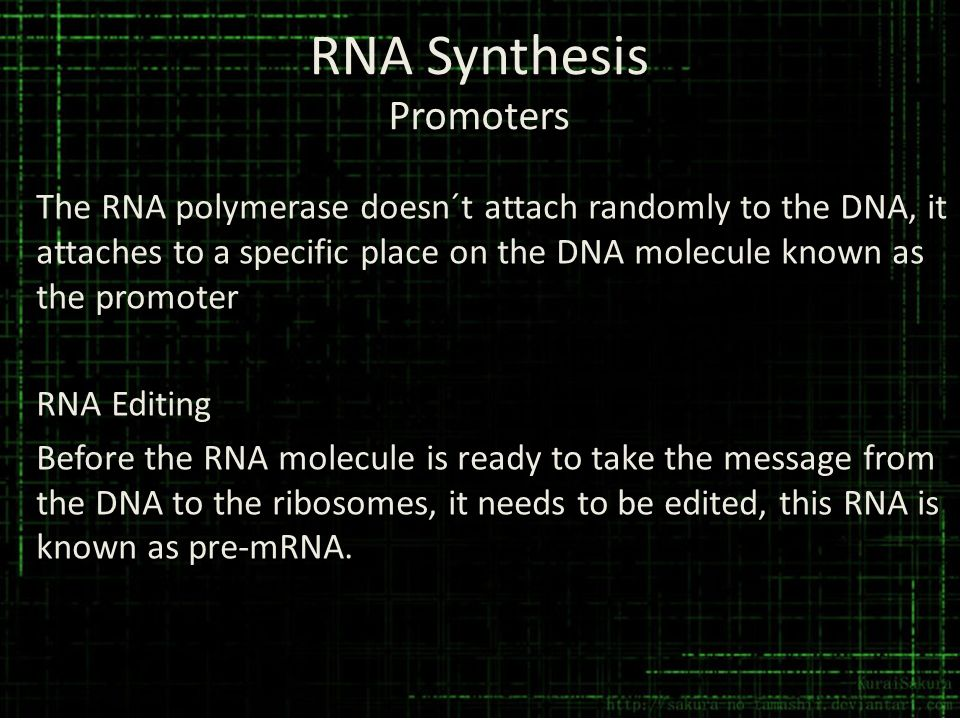 RNA Synthesis Promoters