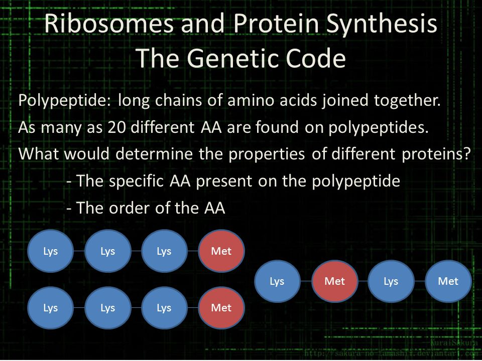 Ribosomes and Protein Synthesis The Genetic Code