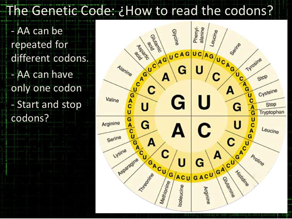The Genetic Code: ¿How to read the codons