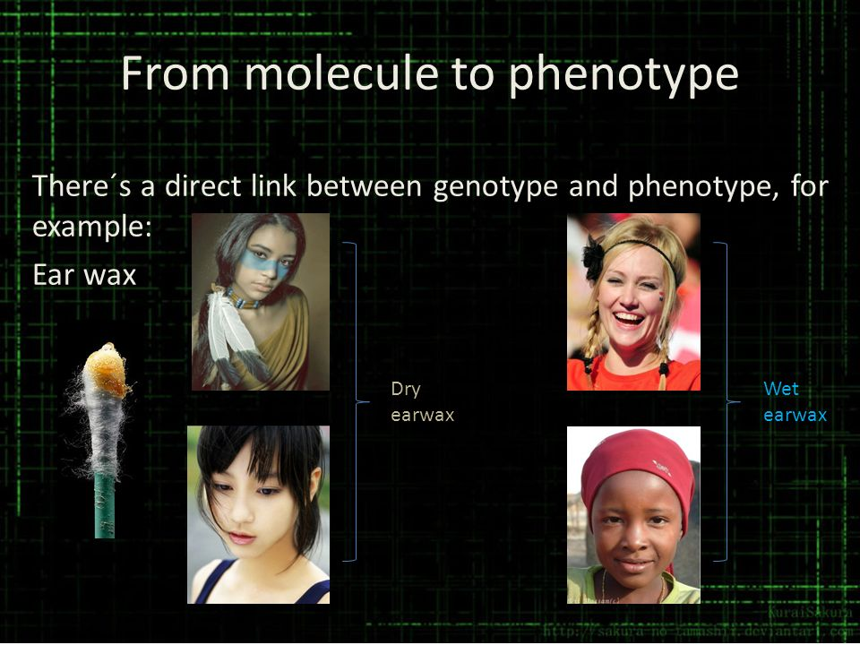 From molecule to phenotype