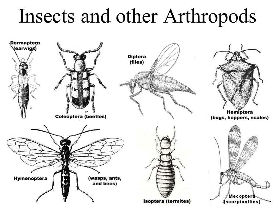 Insects and other Arthropods