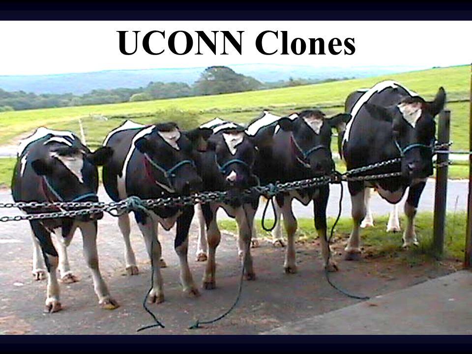 UCONN Clones