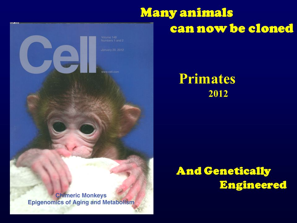 Primates Many animals can now be cloned And Genetically Engineered
