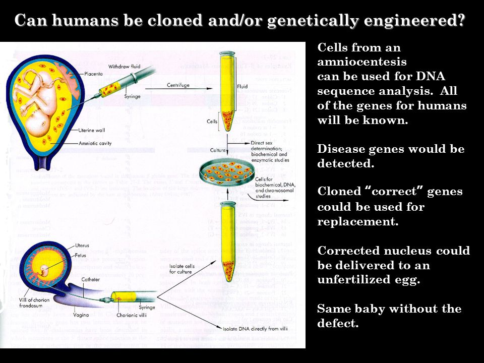Can humans be cloned and/or genetically engineered