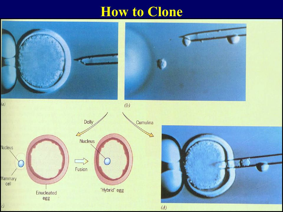 How to Clone