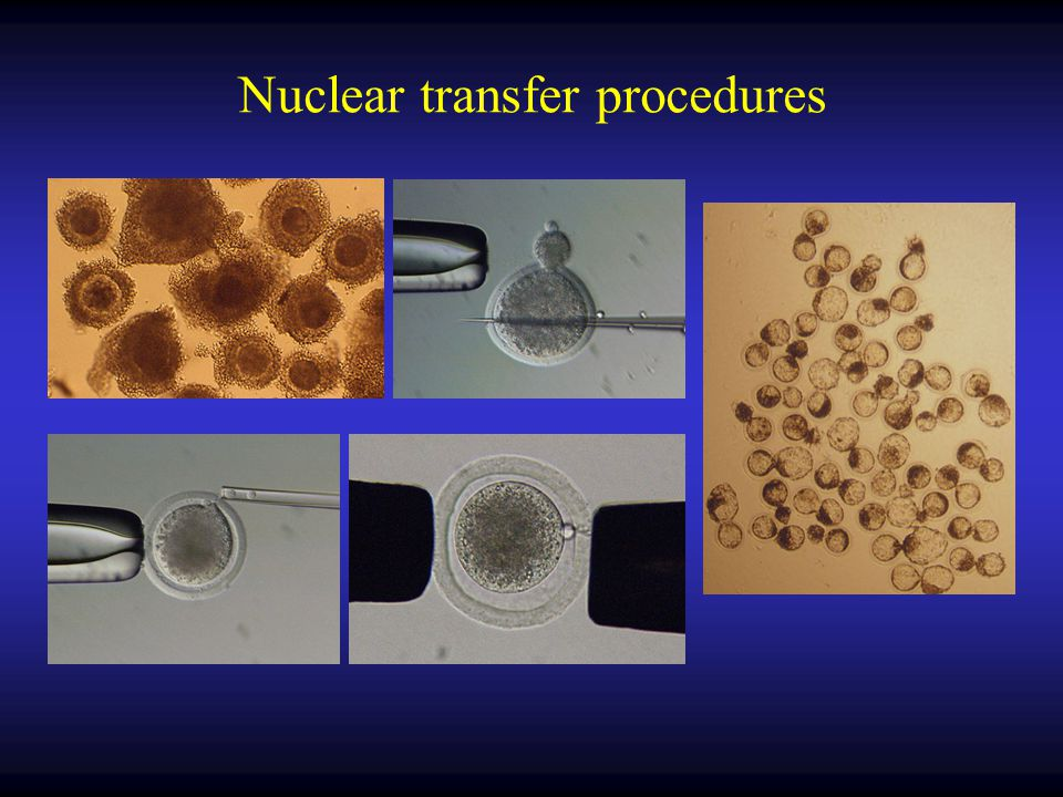 Nuclear transfer procedures