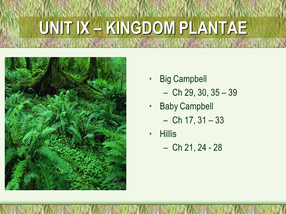 UNIT IX – KINGDOM PLANTAE