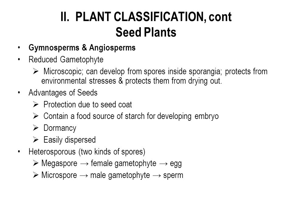 II. PLANT CLASSIFICATION, cont Seed Plants