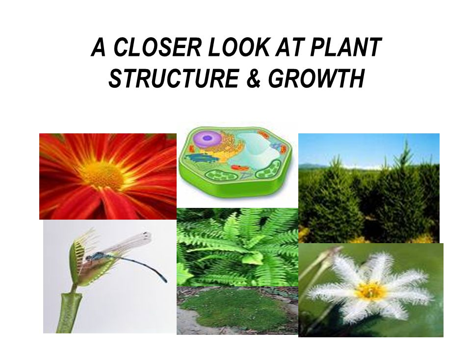 A CLOSER LOOK AT PLANT STRUCTURE & GROWTH