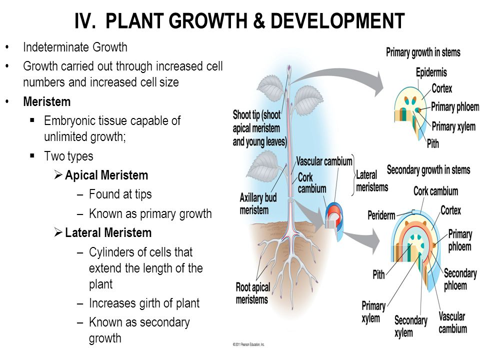 IV. PLANT GROWTH & DEVELOPMENT