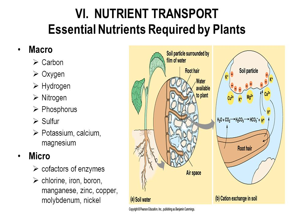 VI. NUTRIENT TRANSPORT Essential Nutrients Required by Plants