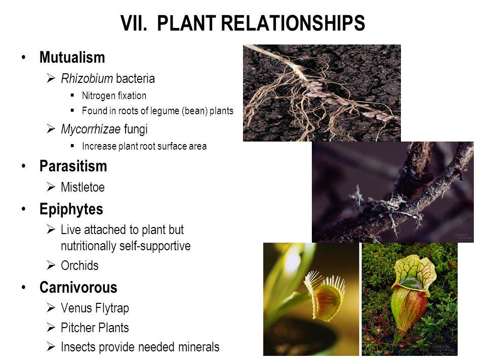 VII. PLANT RELATIONSHIPS