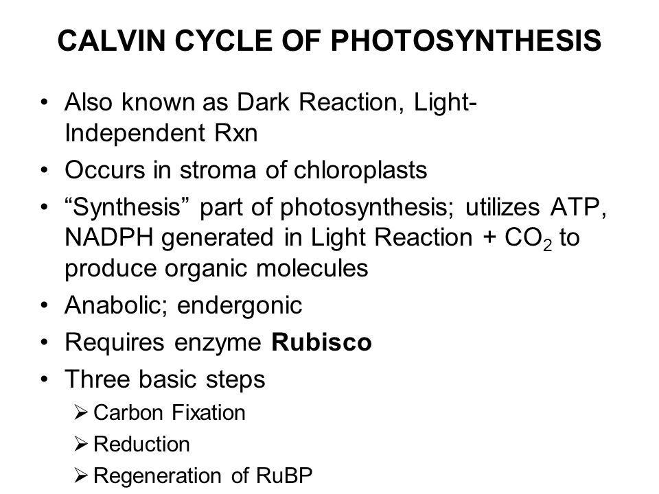 CALVIN CYCLE OF PHOTOSYNTHESIS