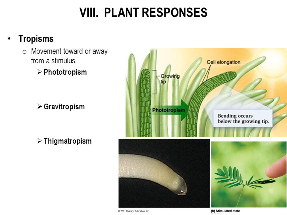 VIII. PLANT RESPONSES Tropisms Movement toward or away from a stimulus