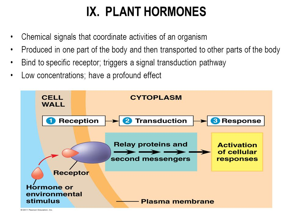 IX. PLANT HORMONES Chemical signals that coordinate activities of an organism.
