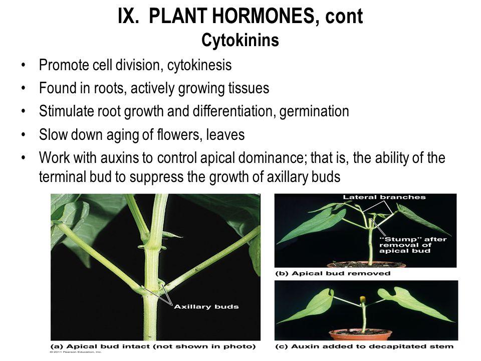 IX. PLANT HORMONES, cont Cytokinins