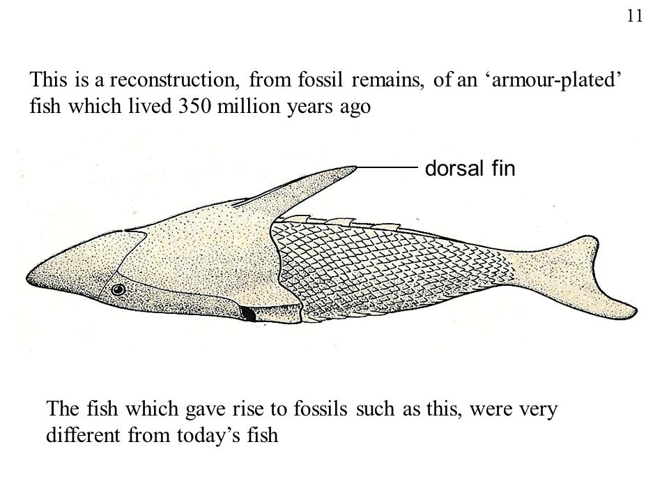 Fossil fish reconstruction