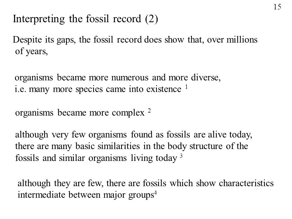 Interpreting the fossil record (2)