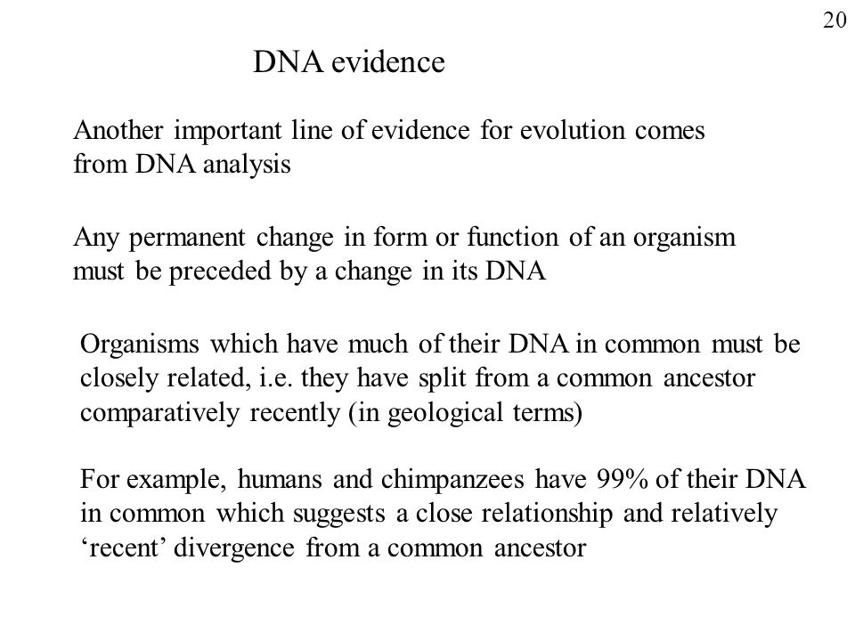 20 DNA evidence. Another important line of evidence for evolution comes from DNA analysis.