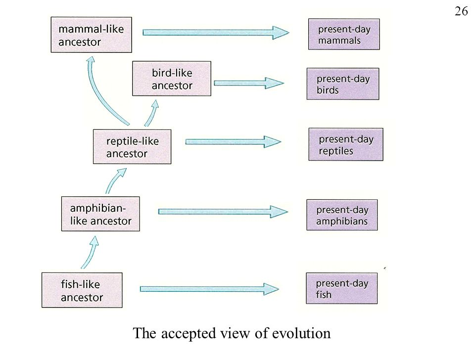 'Correct' evolutionary sequence