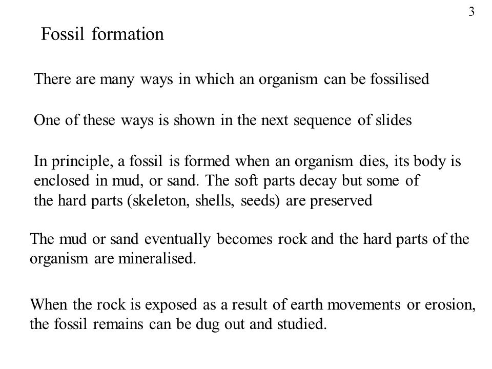 3 Fossil formation. There are many ways in which an organism can be fossilised. One of these ways is shown in the next sequence of slides.