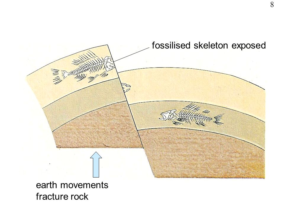 fossilised skeleton exposed