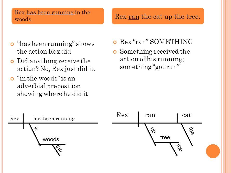 Rex ran the cat up the tree.