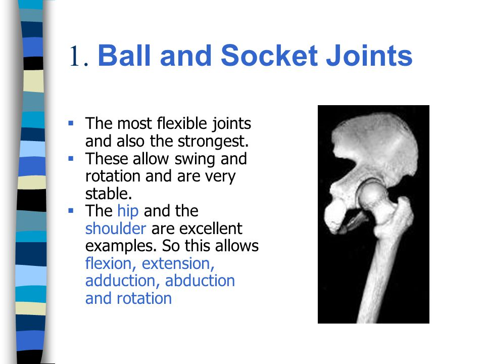 1. Ball and Socket Joints The most flexible joints and also the strongest. These allow swing and rotation and are very stable.
