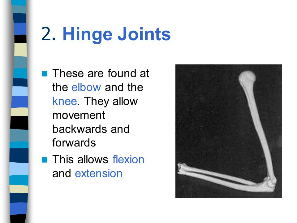 2. Hinge Joints These are found at the elbow and the knee. They allow movement backwards and forwards.