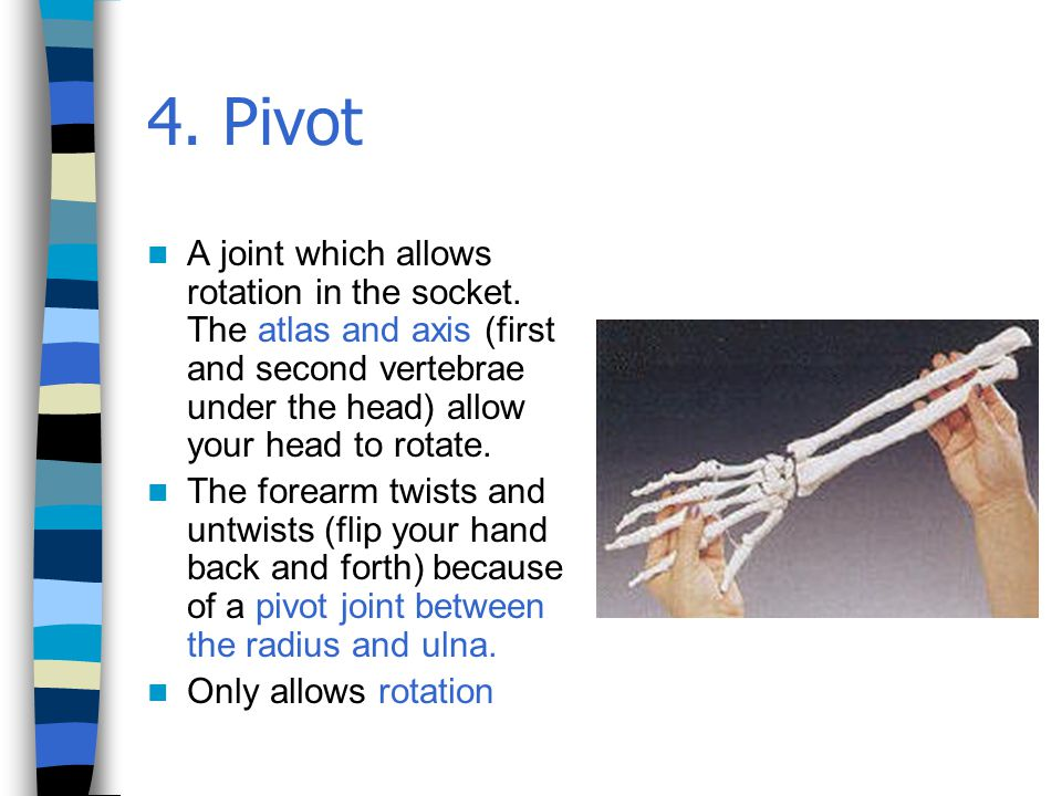 4. Pivot A joint which allows rotation in the socket. The atlas and axis (first and second vertebrae under the head) allow your head to rotate.