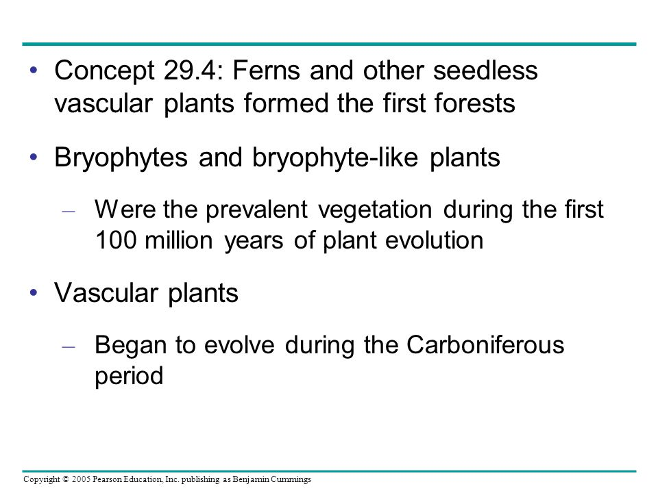 Bryophytes and bryophyte-like plants
