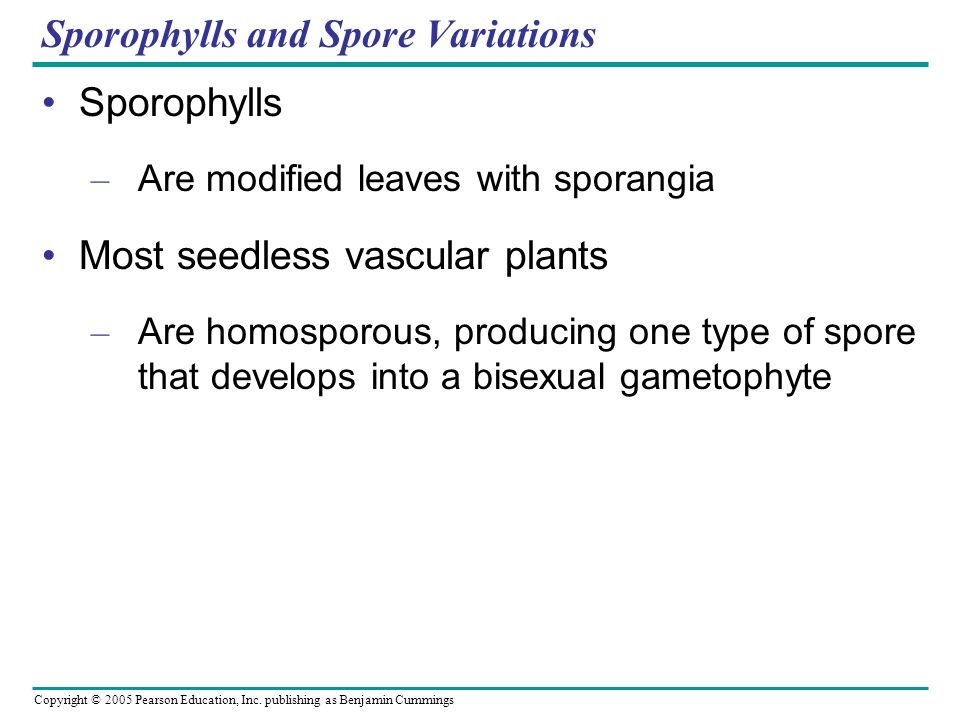 Sporophylls and Spore Variations