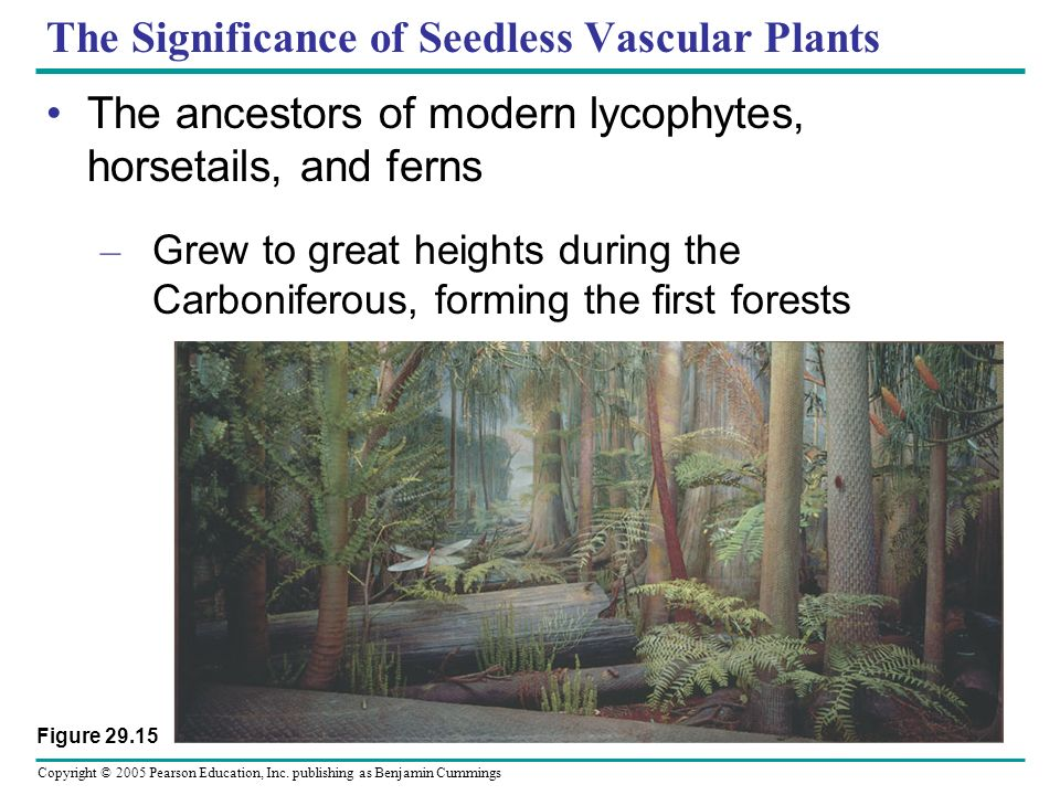 The Significance of Seedless Vascular Plants