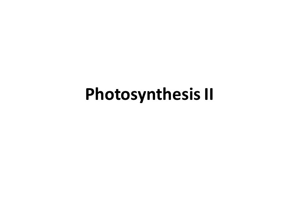 Photosynthesis II