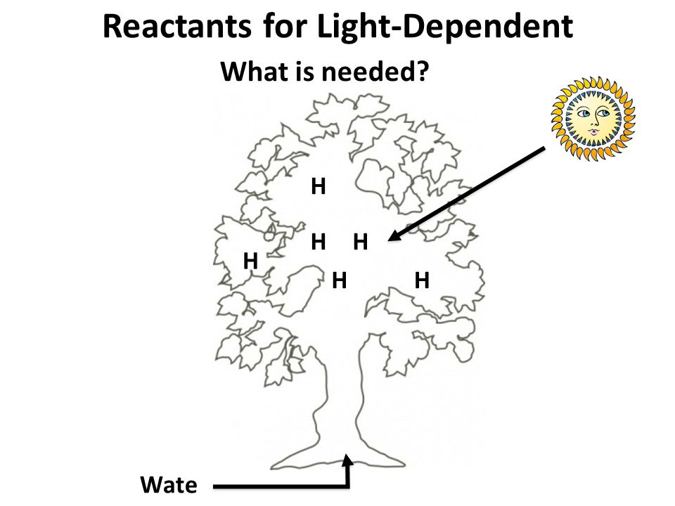 Reactants for Light-Dependent