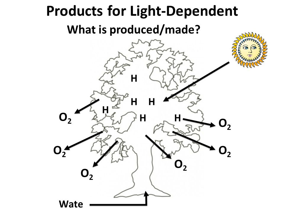 Products for Light-Dependent