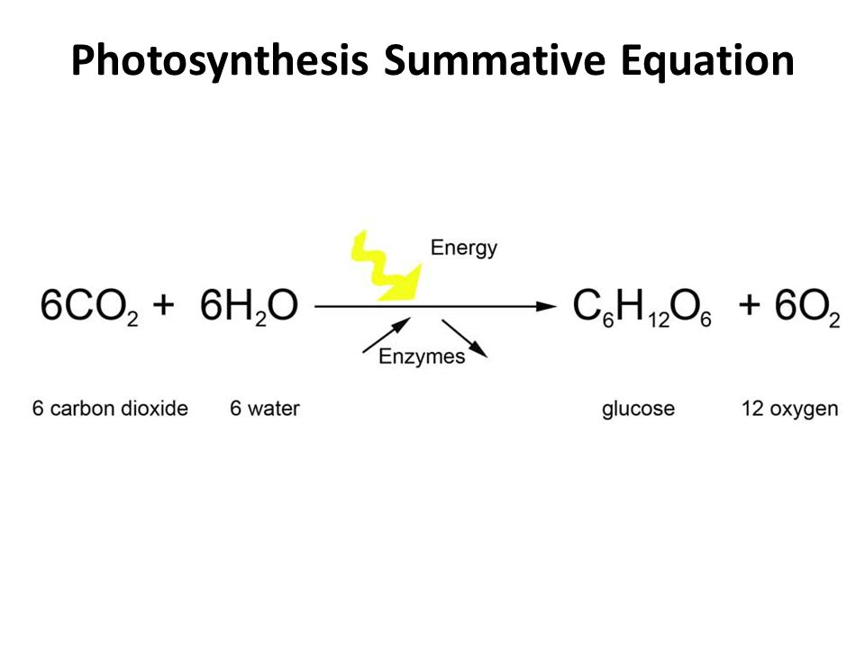 Photosynthesis Summative Equation