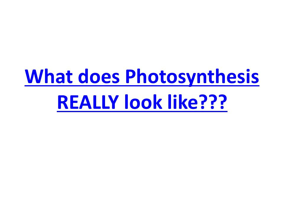 What does Photosynthesis REALLY look like