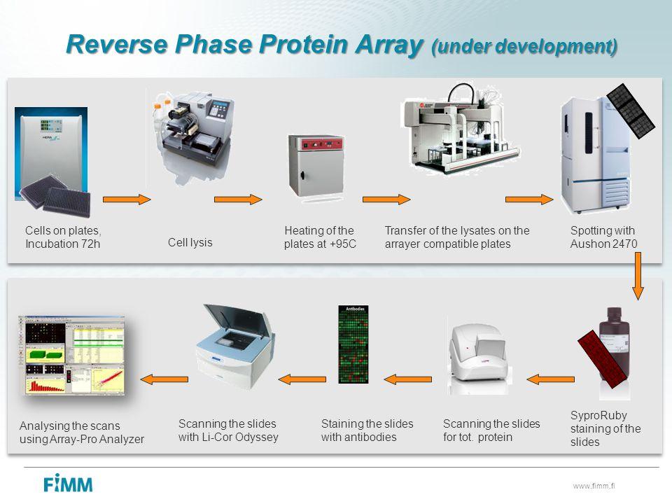 Reverse Phase Protein Array (under development)