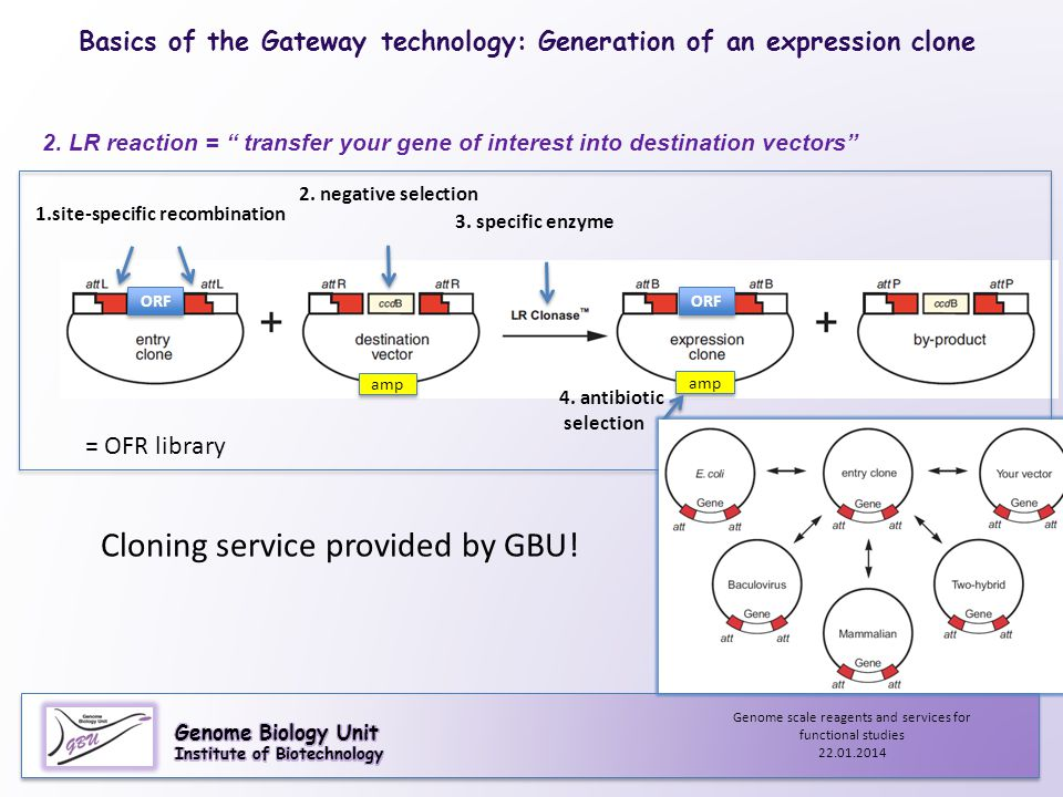 Cloning service provided by GBU!