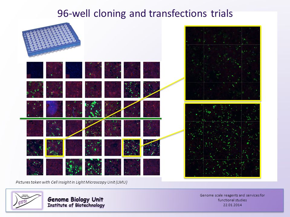 96-well cloning and transfections trials